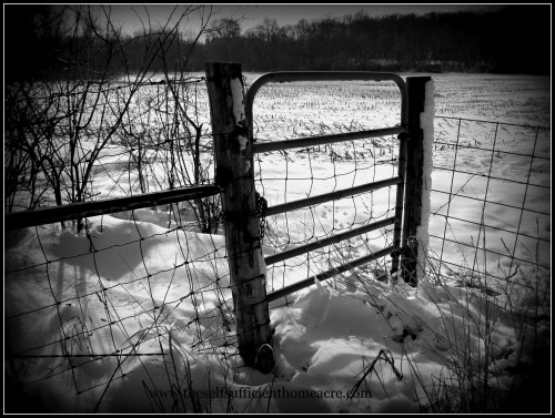gate with snow