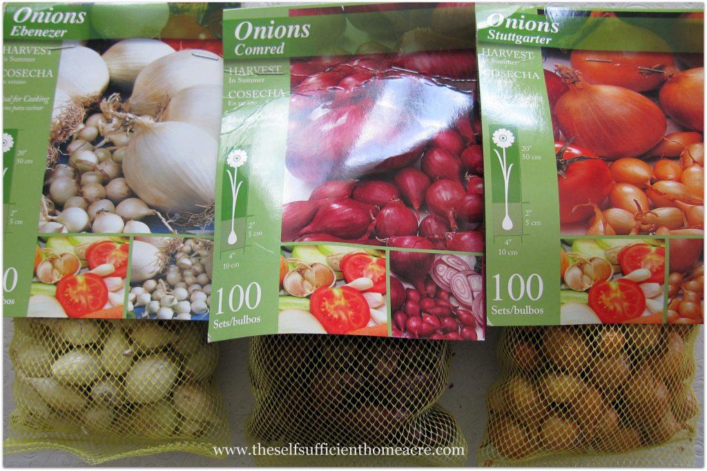 Onion sets, ready to plant.