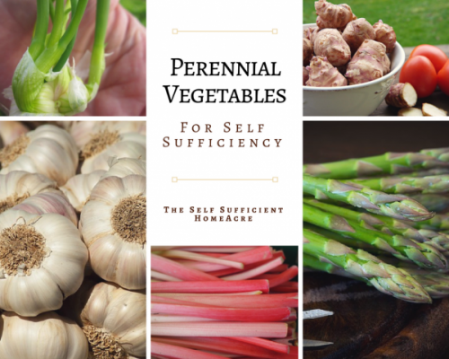 Perennial Vegetables for Self-Reliance