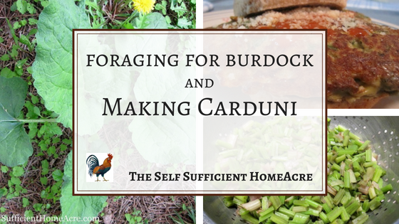 Foraging for Burdock and Making Carduni