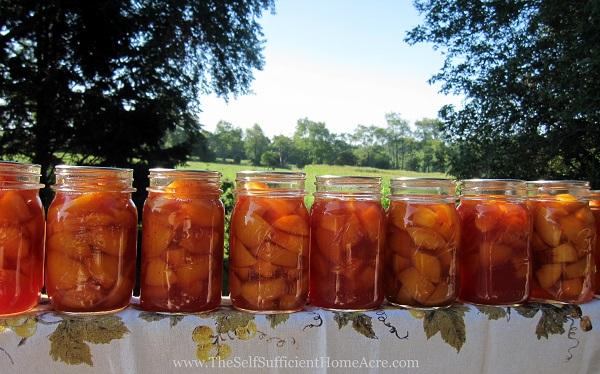 Canning a Bushel of Peaches