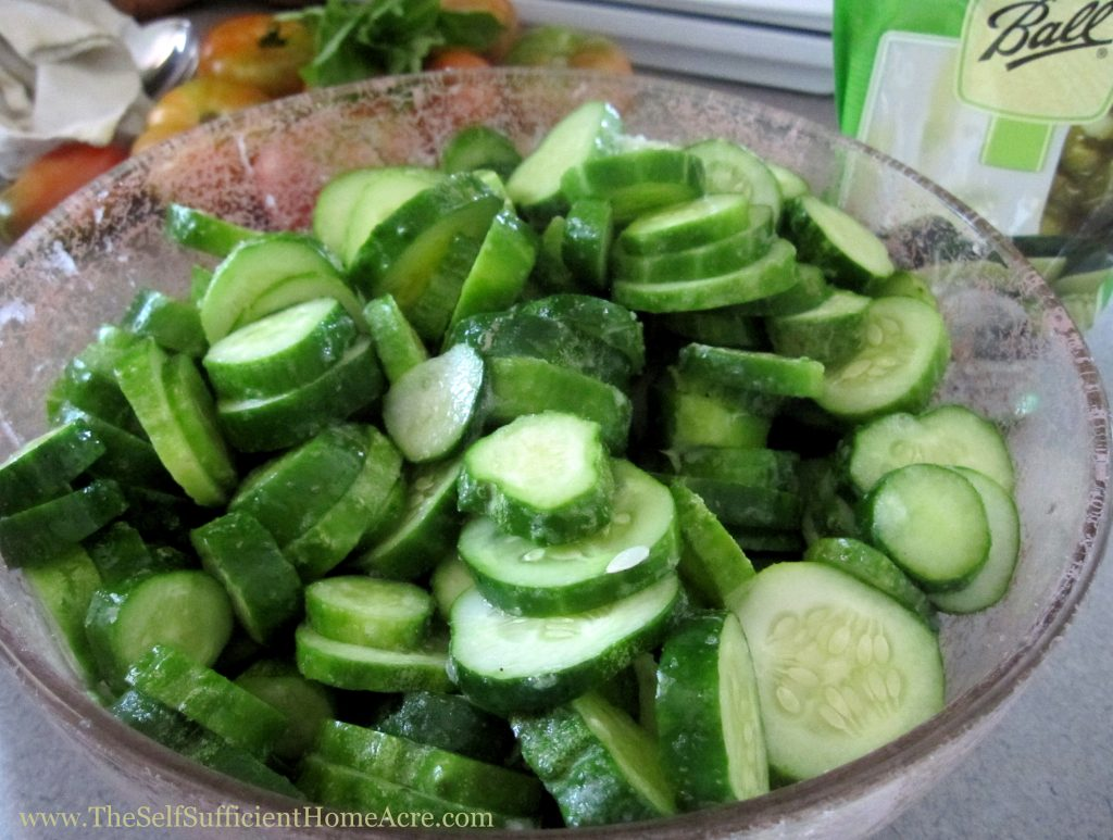 Cucumbers ready to pickle