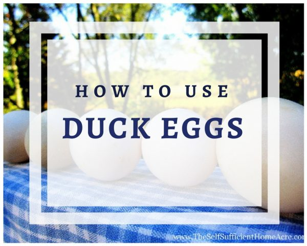 How to use duck eggs banner