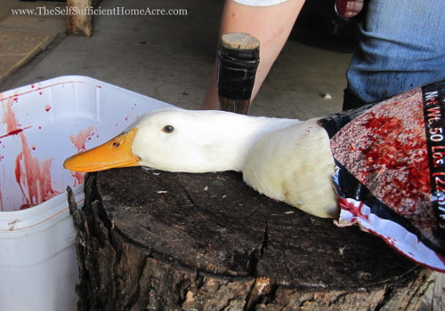 s duck 1