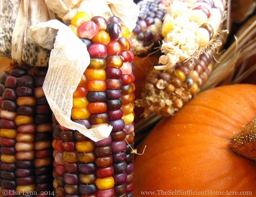 The End of Summer on Our Homestead - The Self Sufficient HomeAcre