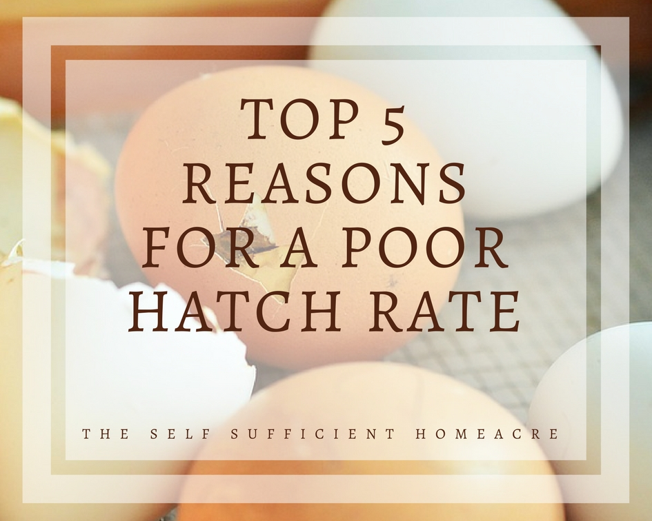 Top 5 Reasons for a Poor Hatch Rate