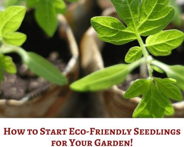 How to Start Eco-Friendly Seedlings for Your Garden