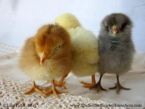 It's Hatching Season!