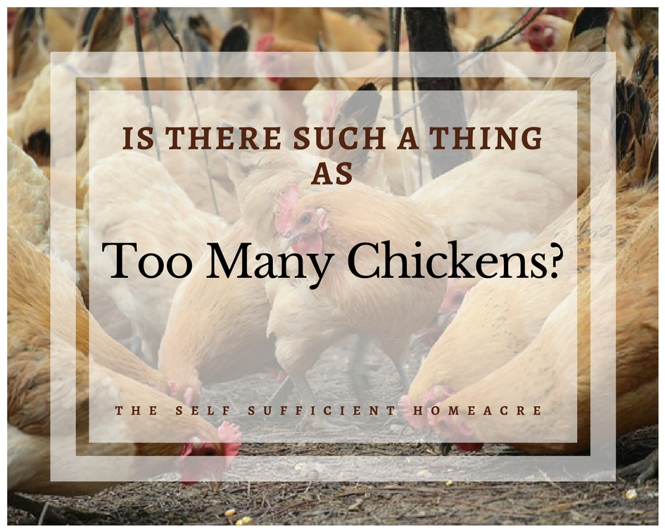 Is There Such a Thing as Too Many Chickens? _The Self Sufficient HomeAcre