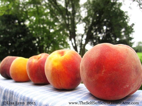 Freezing 20 Pounds of Organic Peaches