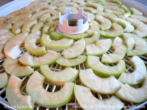Dehydrating 20 Pounds of Ginger Gold Apples
