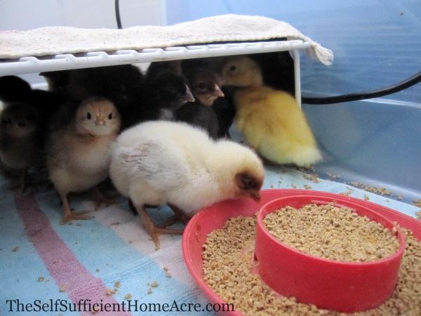 My Redneck Brooder Box