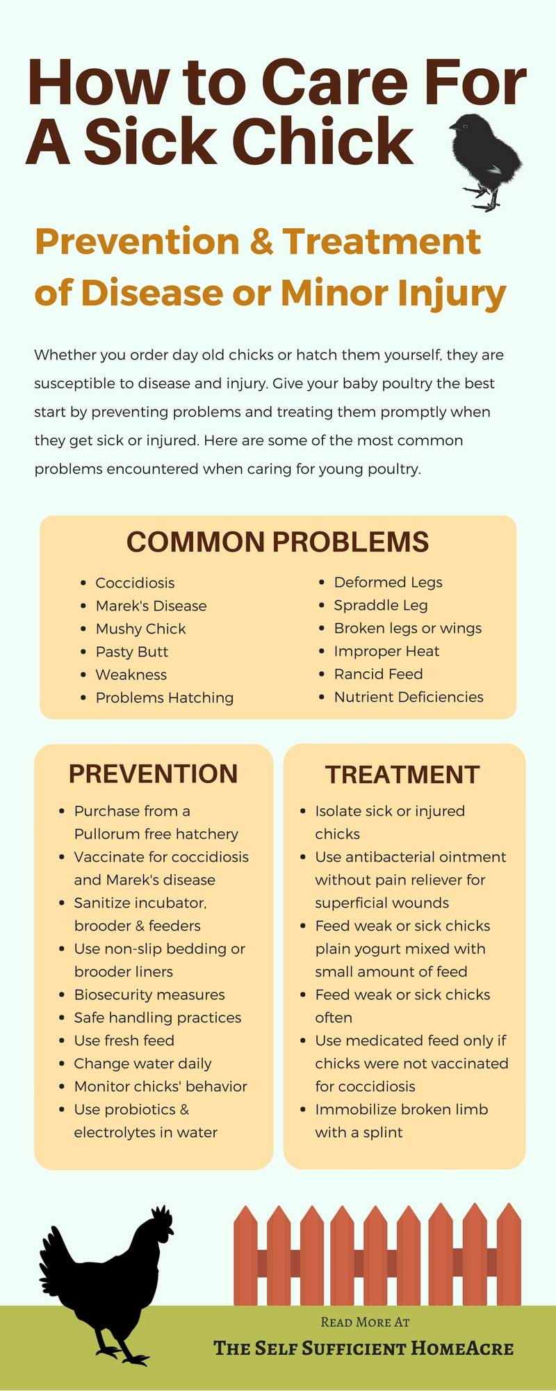 Sick or Injured Chick Infographic - The Self Sufficient HomeAcre