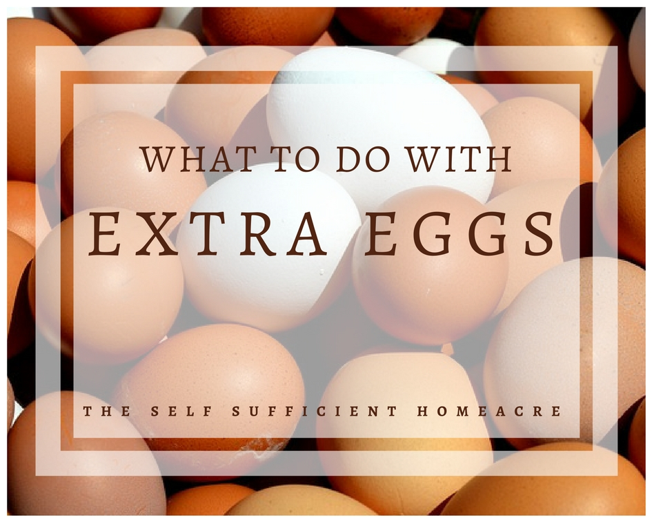 What to do With Extra Eggs?