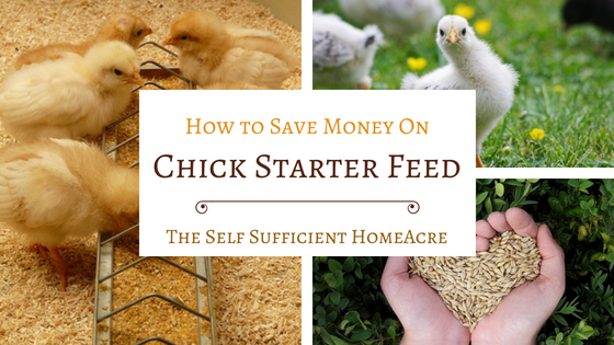 How To Save Money On Chick Starter Feed