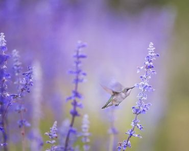 How to Make the Best Hummingbird Nectar