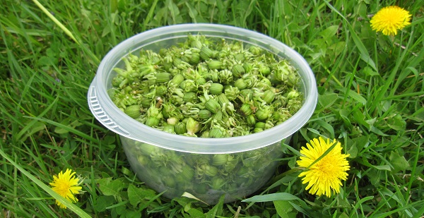 bowl of dandelion buds