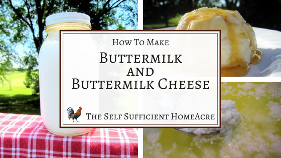 How to Make Buttermilk & Buttermilk Cheese