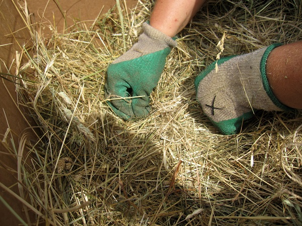 tying off the twine to form a bale of hay