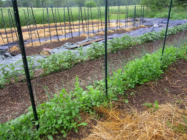 Your spring garden will be ready much sooner if you take care of your fall garden chores!