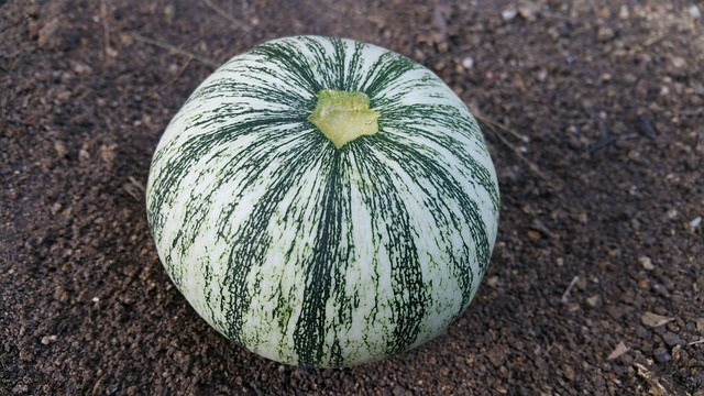 squash with no stem