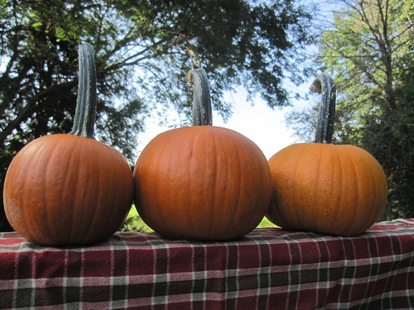 25 of the Best Ways to Use Leftover Pumpkins