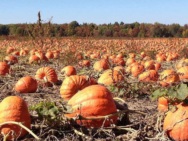 Grow the Best Pumpkins for Your Homestead!