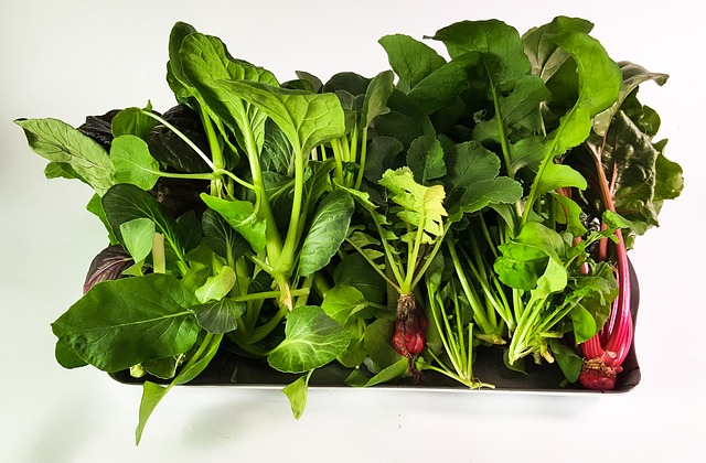 7 Steps to Get Started with Organic Growing Using Aquaponics