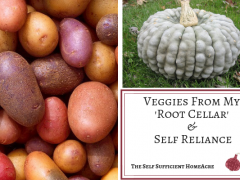 Veggies From My Root Cellar & Self Reliance