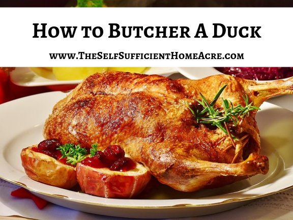 How to Butcher a Duck with Complete Instructions