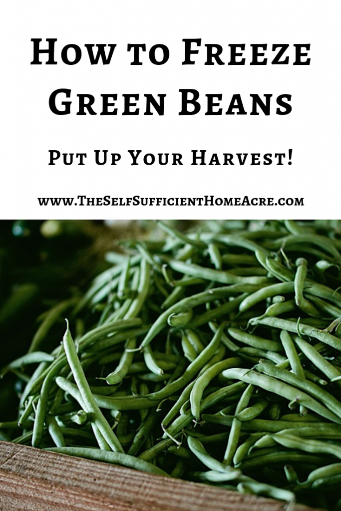 How to Freeze Green Beans...3 methods for blanching and freezing green beans. Learn to preserve your harvest!