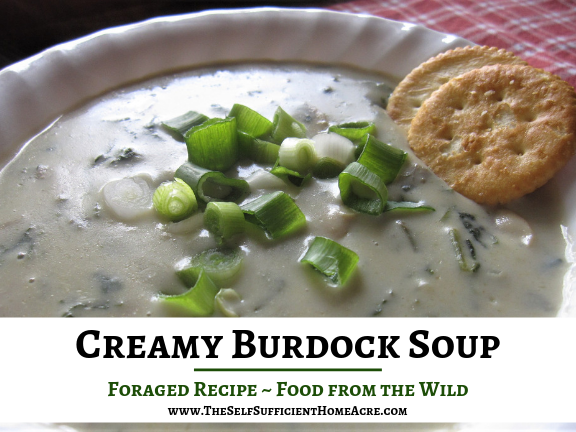 Creamy Burdock Soup Foraged Recipe by The Self Sufficient HomeAcre