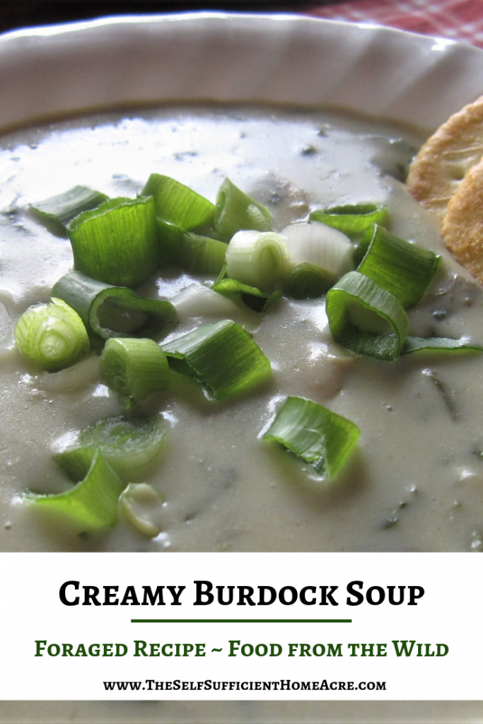 Creamy Burdock Soup - Foraged Recipe - Food from the Wild by The Self Sufficient HomeAcre