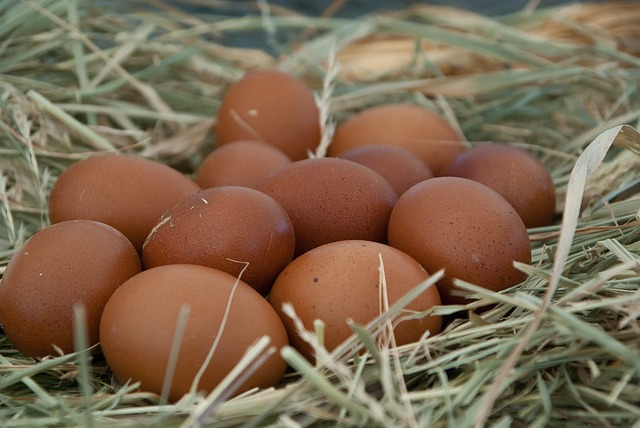 Your hens might be stashing their eggs in a hiding spot