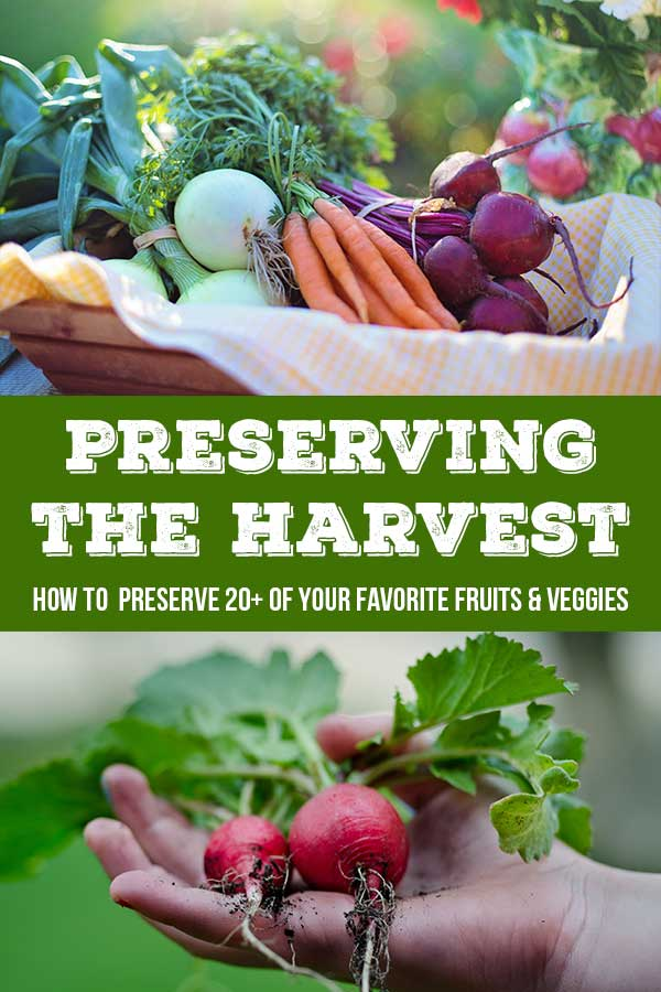 Preserving the Harvest - Fresh Pack Garlic Dill Pickles by The Self Sufficient HomeAcre