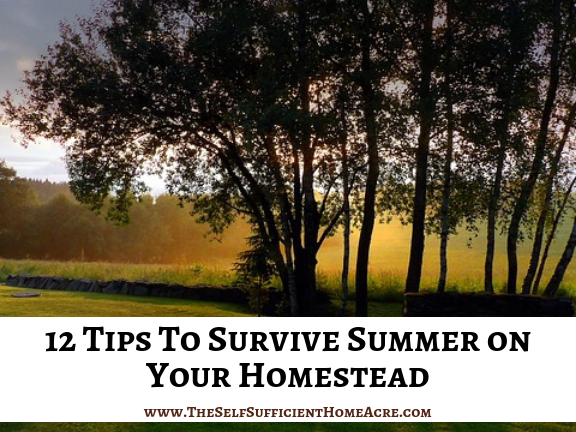 12 Tips To Survive Summer on Your Homestead