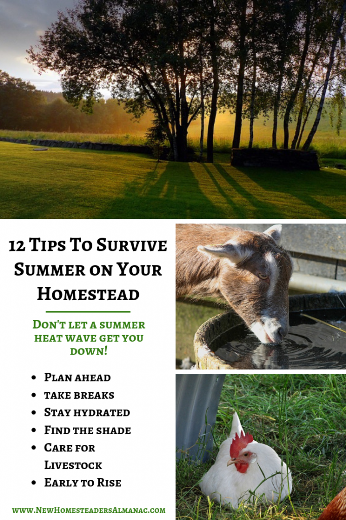 12 Tips to Survive Summer on Your Homestead - The Self Sufficient HomeAcre