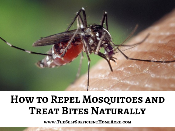 How to Repel Mosquitoes and Treat Bites Naturally - The Self Sufficient HomeAcre