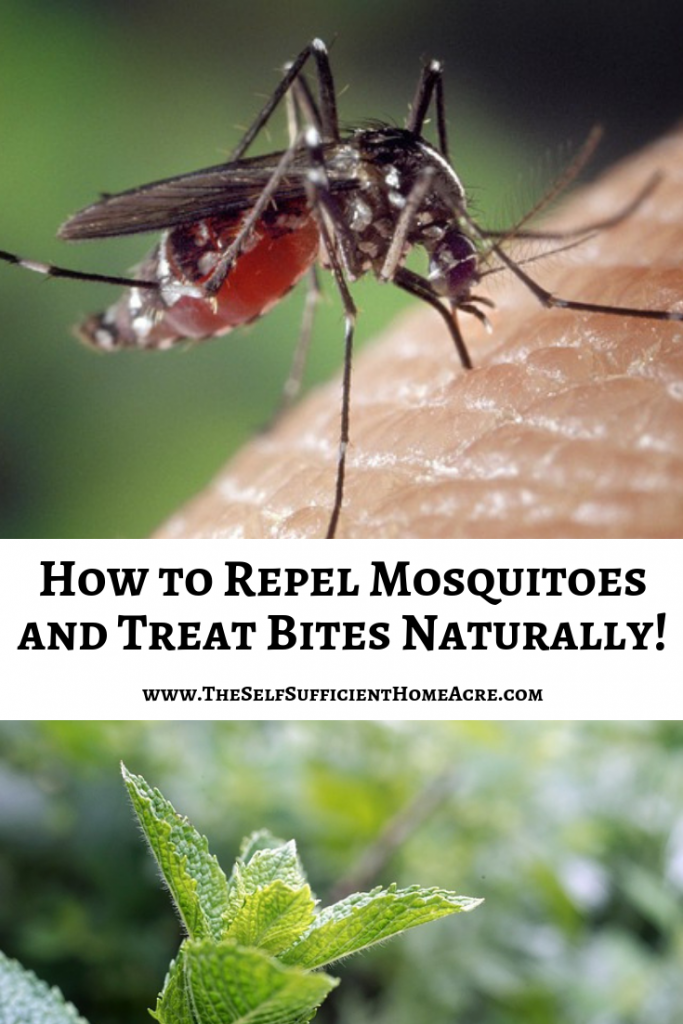 How To Repel Mosquitoes And Treat Bites Naturally The Self