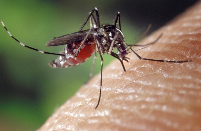 How to Repel Mosquitoes and Treat Bites Naturally