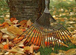 Fall Garden Chores Checklist