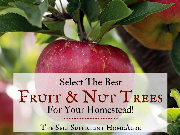 Select the Best Fruit and Nut Trees for Your Homestead by The Self Sufficient HomeAcre