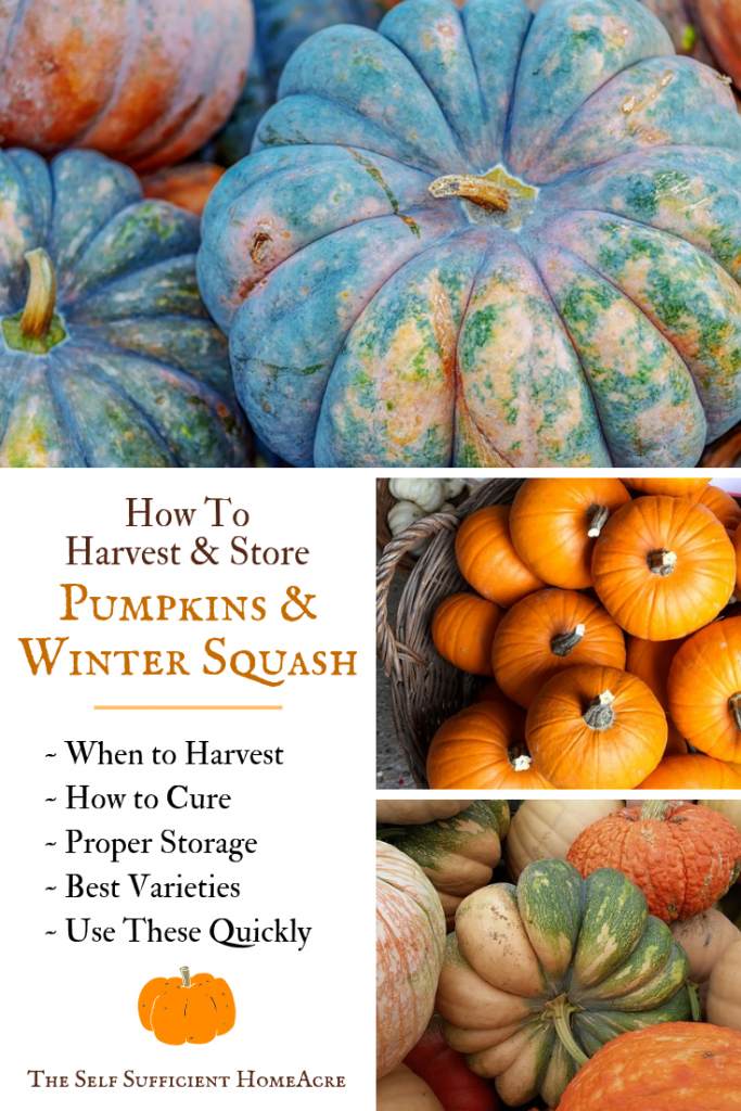 How to Harvest and Store Pumpkins and Winter Squash by The Self Sufficient HomeAcre