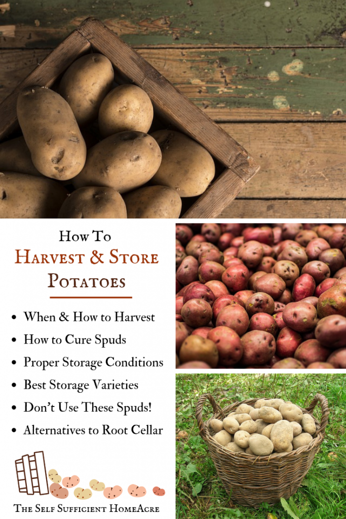 How to Harvest and Store Potatoes by The Self Sufficient HomeAcre - Learn how to #Harvest #Potatoes properly, the #BestPotatoStorageConditions and where to keep them!