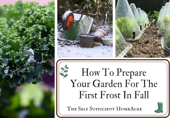 How to Prepare Your Garden for the First Frost in Fall by The Self Sufficient HomeAcre