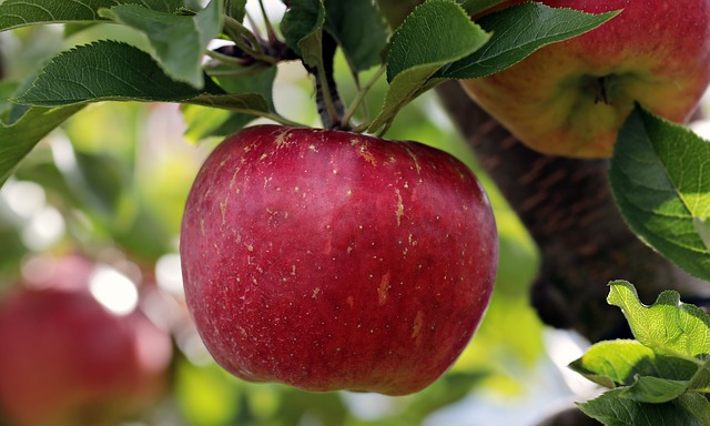 Select the Best Fruit and Nut Trees for Your Homestead