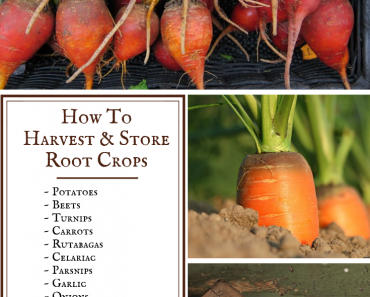 The Best Way to Harvest and Store Root Crops