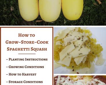 How to Grow, Store & Cook Spaghetti Squash