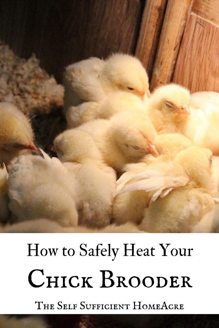 How to Safely Heat Your Chick Brooder