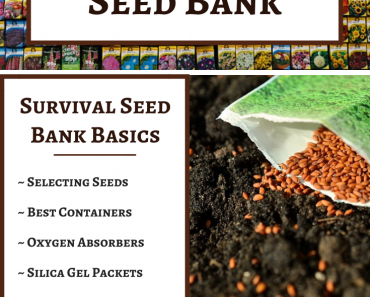 How to Make a Survival Seed Bank